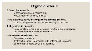 organellar genome