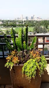Urban Garden Denver - how does your garden grow denver life home u0026 design