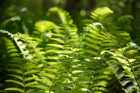 Free Picture Leaf Nature Fern Green Leaf Plants During Daytime Free Stock Photo