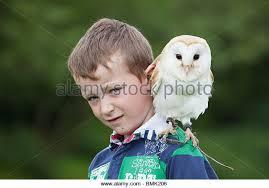Owl Shoulder - pet owl stock photos pet owl stock images alamy