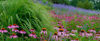 Chicago Botanic Garden Membership Chicago Botanic Garden Photo By Allen Rokach Http Www