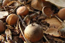 help collect tree seeds for growing chesapeake bay