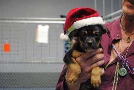 shelters u0027 neediest animals deserve a christmas too silver city