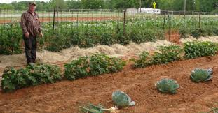 east texas gardening welcome to east texas gardening u2013 briefs on