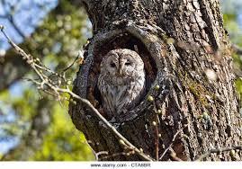 owl tree trunk stock photos owl tree trunk stock