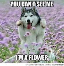 Weekend Dog Meme - sharing pawsome pet stuff on social pet saturday pawsitively pets