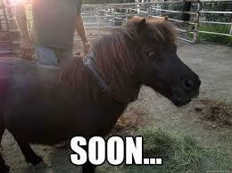 Soon Horse Meme - soon evil mini horse quickmeme