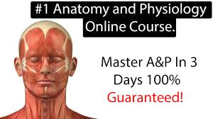 Anatomy And Physiology Class Anatomy And Physiology Online Course Learn Anatomy And Physiology