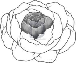 how to draw a peony peony flower step by step drawing guide by