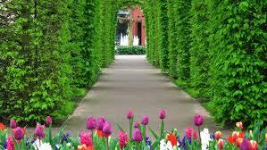 flower garden wallpaper holland u2013 best wallpaper download