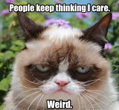 Thinking Cat Meme - grumpy cat people keep thinking i care weird cats humor