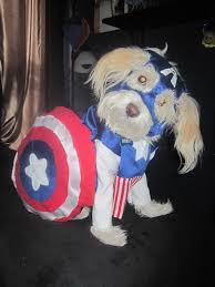 diy captain america for your dog humor lol funnypuppies