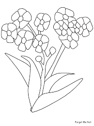 forgetmenot flowers coloring pages u0026 coloring book