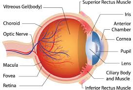 Night Blindness Deficiency What Is Nyctalopia Or Night Blindness Evonews