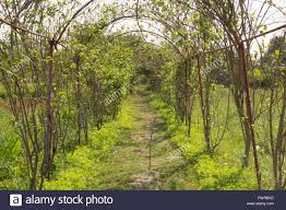 curved trees path walkway in garden stock photo royalty free