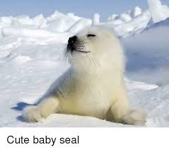Baby Seal Meme - cute baby seals happy memes baby best of the funny meme