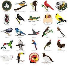 birds bird and animal