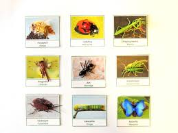 fun insects picture to object matching with free multilingual 3