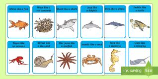 wildlife treasury cards animal movement cards sea the sea animals