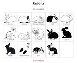 rabbit prints rabbit graphics cat graphic selection