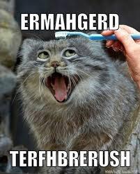 Cat Lady Meme - funny cat lady memes images