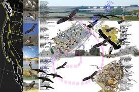 Duck Migration Map Michael Kim Landscape Architecture