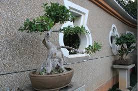 plant pots wholesale artificial poinsettia plant large outdoor