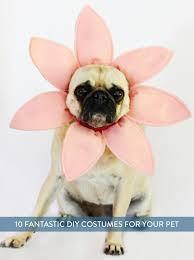 Large Dog Halloween Costume Ideas 10 Diy Dog Halloween Costumes Images Costume