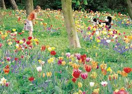 best spring bulbs for new england