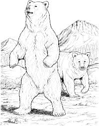 sketching brown bears bear coloring pages bear