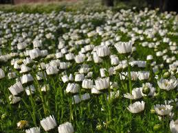 free images grass field lawn meadow petal cute female