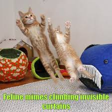 Invisible Cat Memes - feline mimes climbing invisible curtains lolcats lol cat