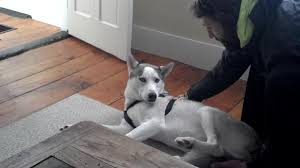 Go Down Stairs by Husky Afraid To Go Down Stairs Jukin Media