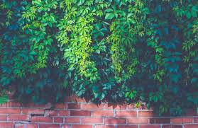Brick Wall by Green Outdoor Plants On Brown Brick Wall Free Stock Photo