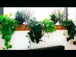 low light plants for office indoor low light plants image of best indoor office plants ideas on