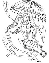free coloring pages jellyfish jelly fish coloring page jellyfish attack a fish coloring page for