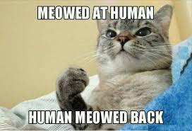 meowed at human cat meme cat planet cat planet