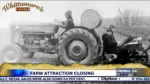 tim hortons open on thanksgiving markham u0027s whittamore u0027s farm closing after being open over sixty years