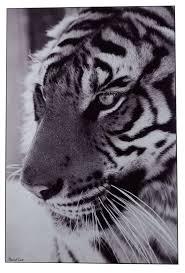 tableau portrait noir et blanc les 25 meilleures idées de la catégorie animaux exotiques sur