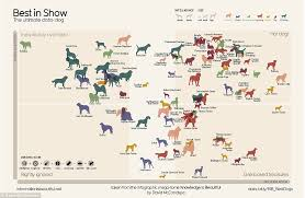 australian shepherd dog names is the collie really top dog canine comparison survey rates each