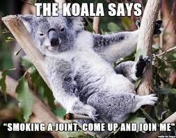 koala and the lizard album on imgur