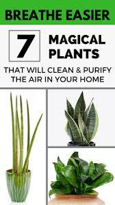 Inside Home Plants by 40 Best Gardens Houseplants Images On Pinterest Houseplants