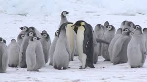 Emperor 1510 Lx Legendary Snow Hill March To The Emperor Penguins Youtube