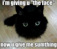 Mean Cat Memes - top 15 cat memes that ultimately broke the internet it s cute