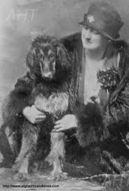 afghan hound giving birth afghan hound times about phyllis robson by lyall payne june