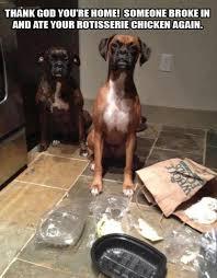Bad Dog Meme - 7 dogs who are really bad at lying dog animal and funny animal