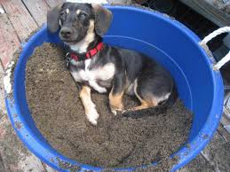 bluetick coonhound jack russell mix images fans share mutt bluetick coonhound rottweiler mix images