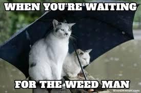 Meme Waiting - waiting for weed man memes stoner cats weed memes
