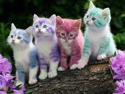 cute baby kittens hd wallpapers u2013 hd wallpapers images pictures