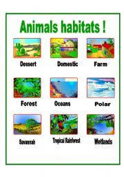 forest habitat clipart clip art library